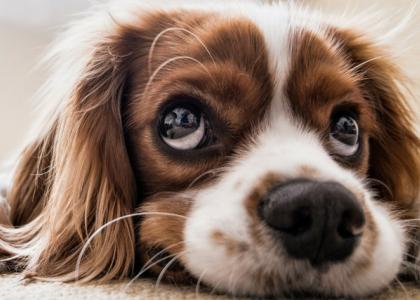 Dog-Diagnostic-Imaging