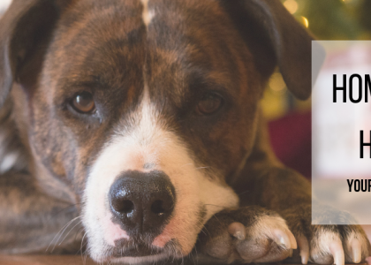 Home for the Holidays: Your New-Pet Checklist