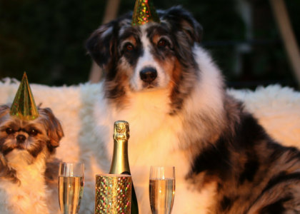 Integrative New Years Resolutions for You and Your Pets