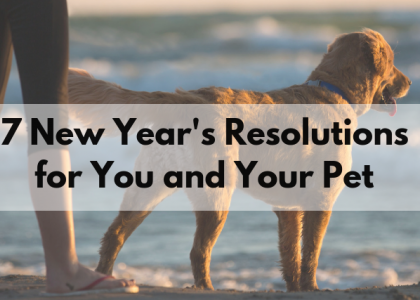 7 New Year's Resolutions for You and Your Pet