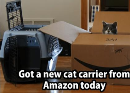 It is possible to get your cat used to the carrier