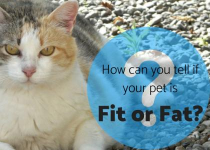 Fit or Fat: Your Pet's Body Condition Score (BCS)