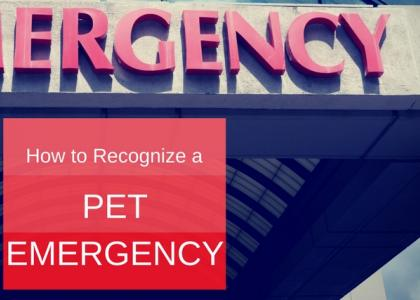 How do you recognize a pet emergency?