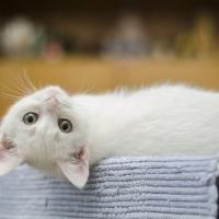 Cat Veteirnary Services in Wynantskill NY