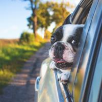 Dog Veterinary Services in Wynantskill NY
